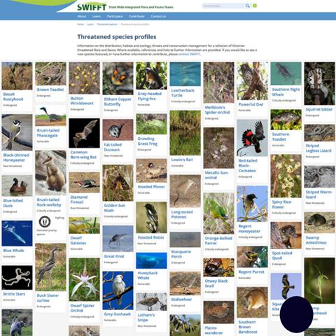 Federation Uni Flora and Fauna Teams Portal website