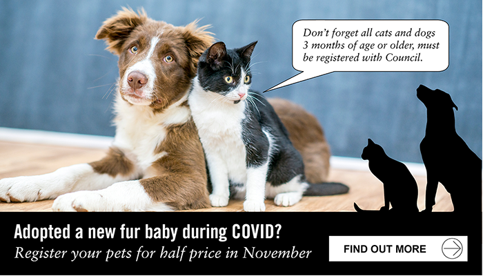 Adopt a new fur baby during COVID? Register your new pets for half price in November