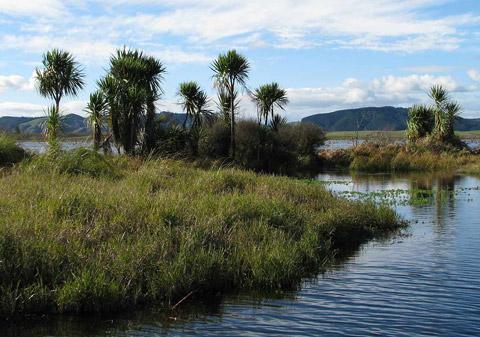 Whangamarino Swamp.