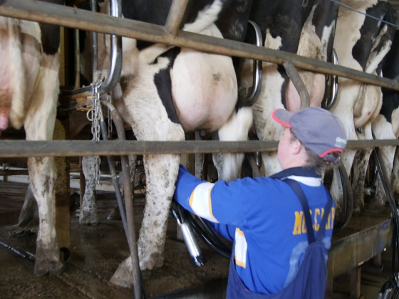 upskilling workers to boost dairy workforce