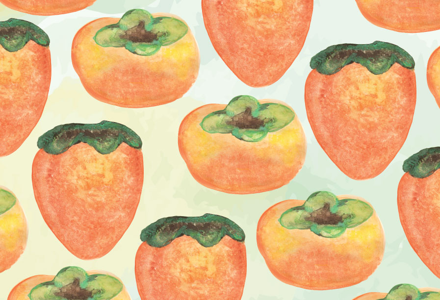 water color illustrations of fuyu and haychia persimmons
