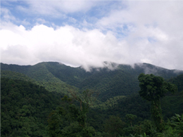 Khe Nuoc Trong forest in Vietnam. © World Land Trust.